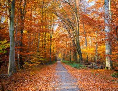 Autumn Create The Perfect Sleep Season