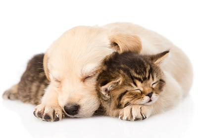 Do Cats And Dogs Have Rem Sleep