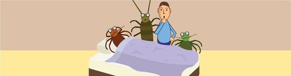 The Secret Life in Your Mattress