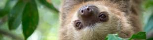 Sleepy sloths and other animals - amazing sleep facts
